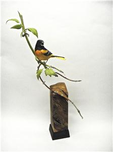 LIFE-SIZE BALTIMORE ORIOLE