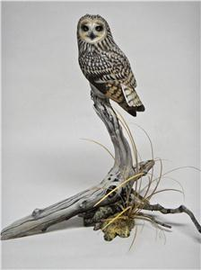 MINIATURE SHORT EARED OWL